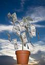 Arbre et argent